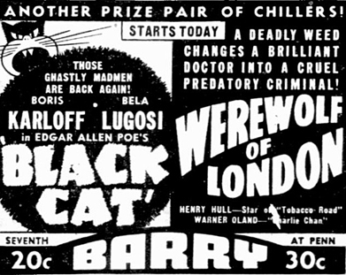 The Black Cat 2
